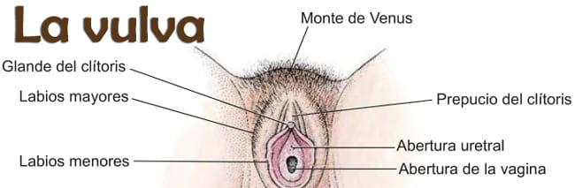 El Clitoris De La Mujer